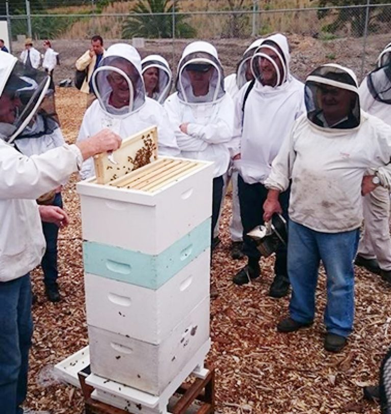 Beginners' Beekeeping Course January 2021