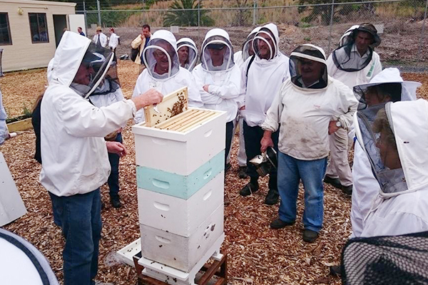 Beginners' Beekeeping Course Febuary 2021