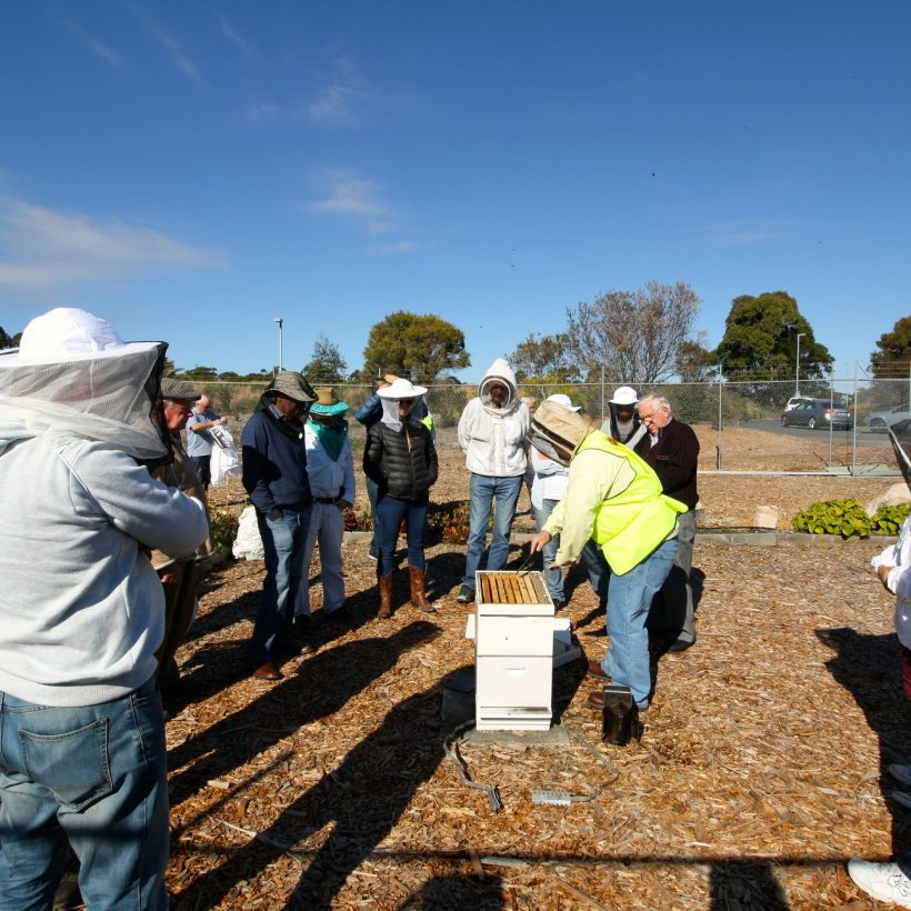 Beginners' Beekeeping Course August 2021